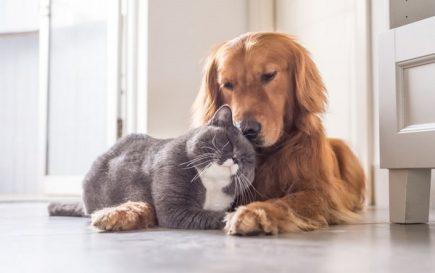 Día de la Mascota: ¿cómo mantener vigilados a nuestros engreídos?