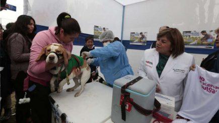 200 mil canes serán inmunizados en nueva campaña antirrábica