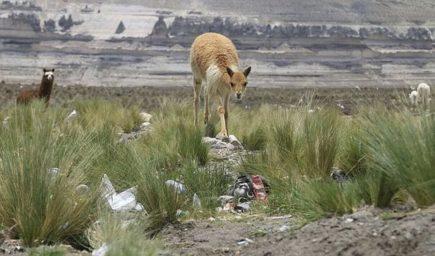 Salinas y Aguada Blanca: Colocarán casetas para evitar daños por asentamientos humanos