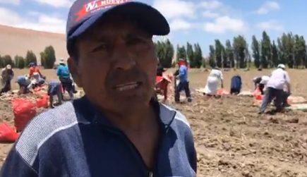 Tía María: protestas afectan cosecha de productos en valle de Tambo  (video)