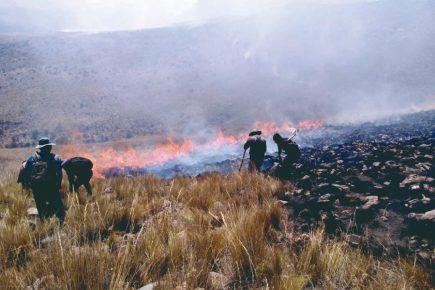 Incendios forestales arrasan el pulmón verde de Sudamérica