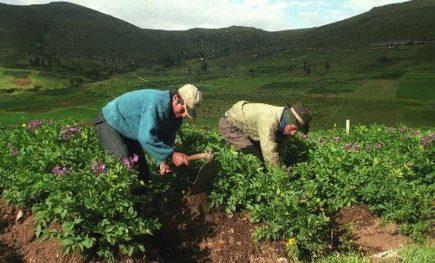 Cámara de Comercio afirma que 100 mil agricultores se beneficiarán con nueva Ley Agraria
