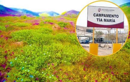 Tía María: Southern Perú se niega a retirarse de Lomas de Cachendo