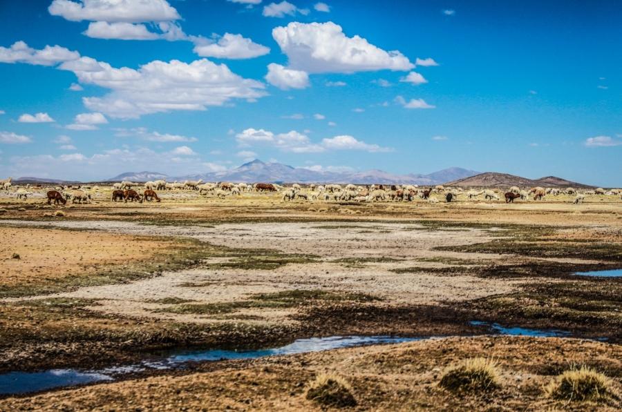 Chalhuanca, el corazón vulnerable del río Chili que es protegido frente al cambio climático