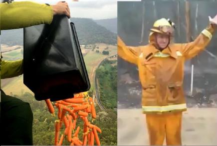 Australia: Lluvias y helicópteros ofrecen esperanza tras incendios