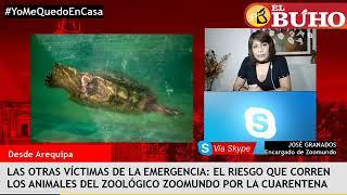 Las  enfermeras que atienden pacientes Covid y los animales de zoológico en cuarentena – Entrevistas