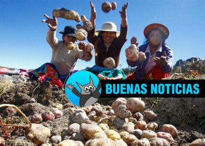 Perú mantiene el primer lugar como productor de papa en Latinoamérica