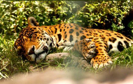 Zoomundo: un mundo animal en peligro