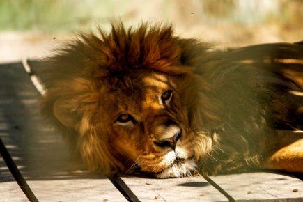 Arequipa: zoológico ZooMundo ante el inminente cierre (FOTOS)