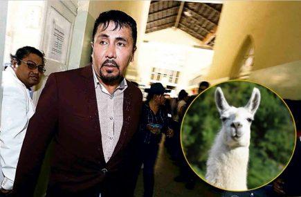 """BBC sobre declaraciones de Cáceres Llica: """"comer carne de llama no protege de covid-19"""""""