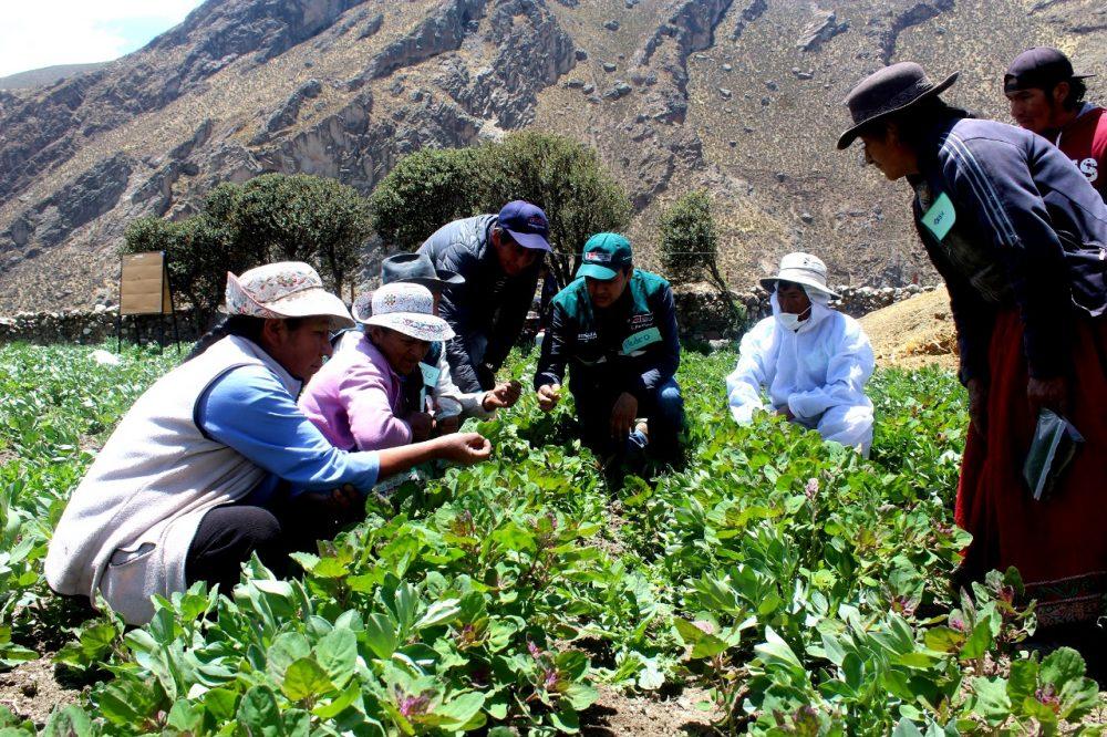 agricultores de arequipa