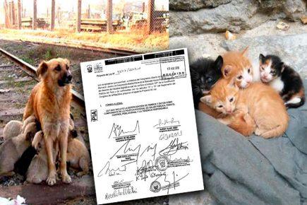 Propuesta de esterilización de animales como política de salud pública en el Congreso