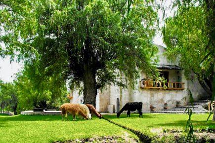 Arequipa inicia la búsqueda de sus árboles patrimoniales