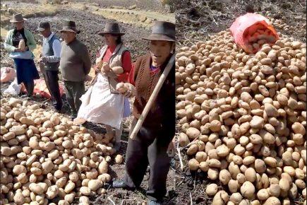 Agricultores en crisis: ¡10 céntimos por cada 100 kilos de papa! (VIDEO)
