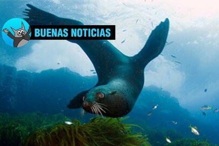 Reserva peruana permitirá proteger ecosistemas marinos únicos en el mundo