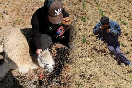Sequía y coronavirus: las  amenazas que acosan  a agricultores peruanos (VIDEO)