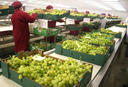 Ica: empresarios suspenden operaciones agrícolas por escalada de violencia