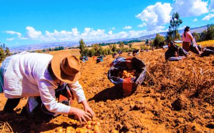 Congreso no aprobó proyecto de Ley Agraria y vuelve a Comisión de Economía