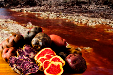 Docentes peruanos usan papas nativas para descontaminar el agua de metales pesados