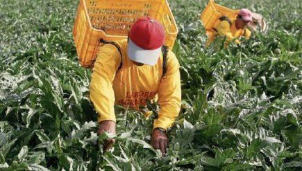 El valor del trabajo y los huevos de oro en el Perú