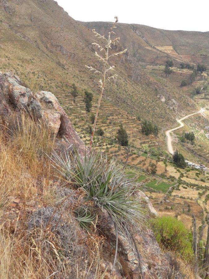 plantas en Arequipa