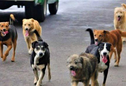 Cerro Colorado y Yura tienen la mayor incidencia de casos de rabia canina