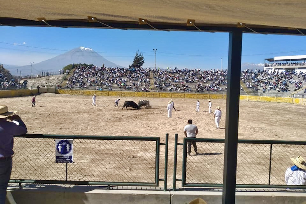 arequipa pelea de toros