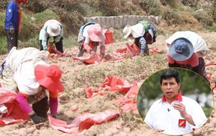 Arequipa: Sociedad Agrícola rechaza propuesta de Castillo sobre prohibir importaciones