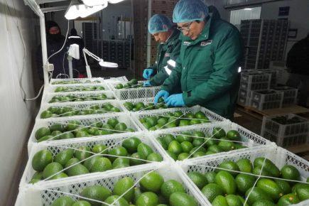 Arequipa: exportaciones de la región crecieron un 67% entre enero y mayo