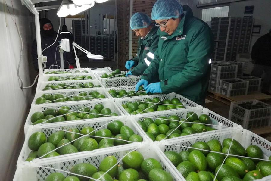 Arequipa exportaciones agroexportacion