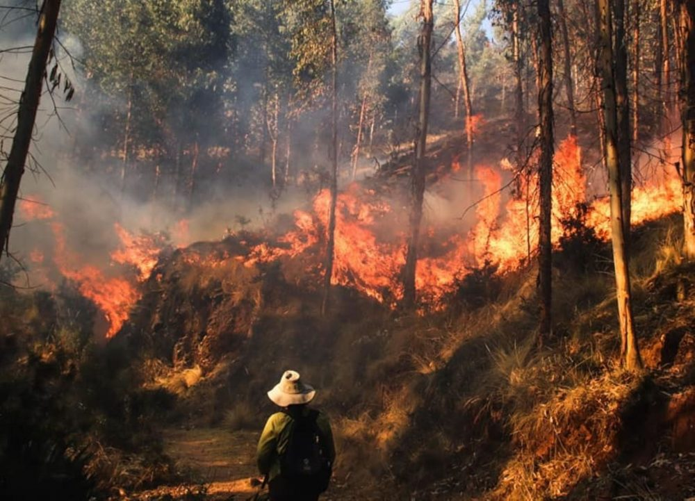 Buscan construir plan de prevención eficaz contra incendios forestales