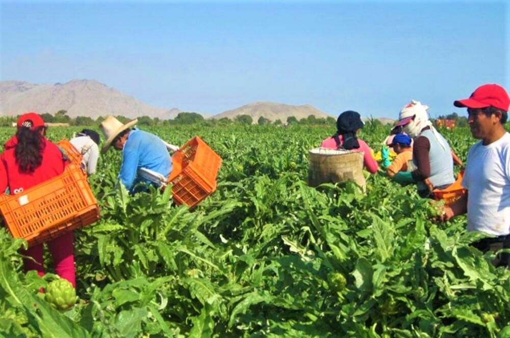 Sociedad Agrícola de Arequipa rechaza que se implemente una segunda reforma agraria