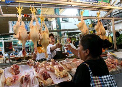 Economista proyecta descenso del precio del pollo en los próximos meses