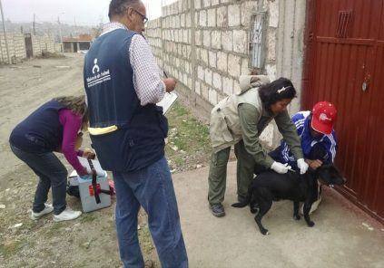 Arequipa tiene el mayor número de casos de rabia canina a nivel nacional