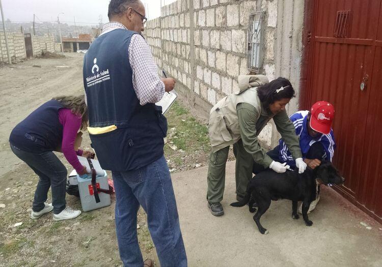 Rabia en Arequipa aumenta