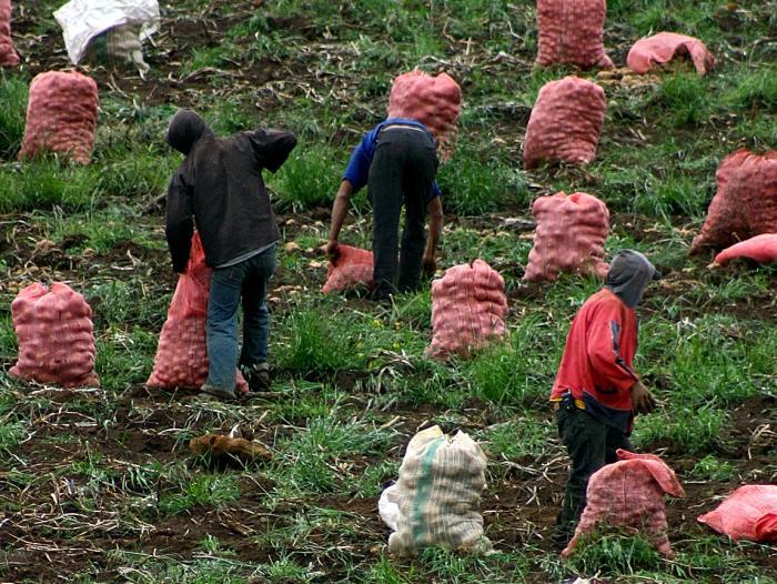 Segunda reforma agraria lanzan este domingo en Cusco