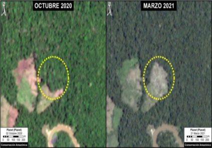 Loreto: Concesión de Conservación registra 131 hectáreas deforestadas entre 2020-2021