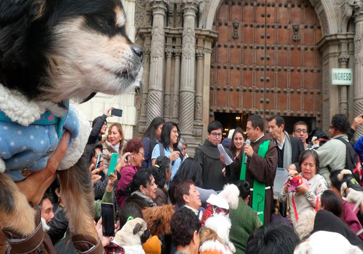 Arequipa: templo de San Francisco bendijo mascotas este fin de semana